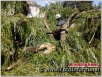 На Кіровоградщині рятувальники продовжують прибирати аварійні дерева