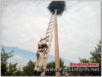 На Кіровоградщині рятувальники врятували пташеня чорногуза