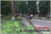 У Кропивницькому на проїжджу частини дороги впало дерево