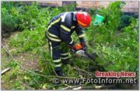 У Кропивницькому аварійне дерево ледь не впало на житловий будинок