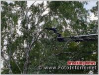 У Кропивницькому на Беляєва ледь не впало дерево