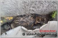 У Кропивницькому єнотовидну собаку повернули в природне середовище існування