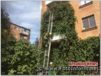 Кіровоградщина: у Олександрії кота з балкону зняли рятувальники