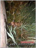 У Кропивницькому рятувальники дістали кота з дерева,  а собаку з води