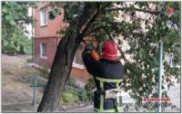 На Кіровоградщині після поривів вітру повалило багато дерев