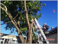 На Кіровоградщині рятувальникам довелося двічі прибирали аварійні дерева