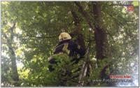 У Кропивницькому щоб врятувати кота довелося викликати рятувальників