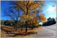 Краса золотої осені у Кропивницькому