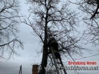 На Кіровоградщині рятувальникам довелося спиляти аварійне дерево