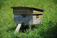 Сладкая история успеха: первая медовая аграрная расписка