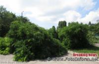 Відеофакт: у центрі Кропивницького впало дерево