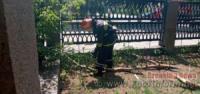 Кропивницький: на території лікарні ледь не впало дерево