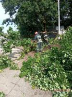 У Кропивницькому дерево впало на електродроти та проїжджу частину дороги