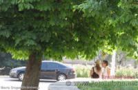 У Кропивницькому від спеки містяни ховаються у затінку
