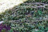 У Кропивницькому видаляють живі дерева
