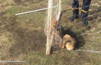 На Кіровоградщині у сітці футбольних воріт заплутався пес
