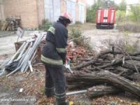 У Кропивницькому дерево впало на пішохідну частину дороги