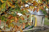 Золота осінь: пейзажі Кропивницького
