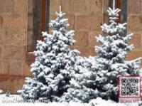 Зимова казка у Кропивницькому