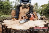 Вирубав більше 800 дерев на території лісництва: мешканцю Гайворонського району повідомлено про підозру