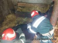 На Кіровоградщині врятували корову,  що потрапила у відвідний отвір у хліві