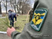 На Кіровоградщині до Дня Незалежності висадили 30 сосен