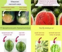 В День кавуна,  розповідаємо як обрати смачну та безпечну ягоду
