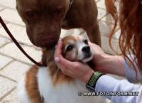 Кропивницький приєднався до Всеукраїнського маршу за права тварин